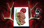 An illustration for a food article on preparing wild game for a gourmet meal. In this case a mule deer taken by the staff outdoors writer and was prepared using red wine, rosemary and a cranberry glaze.