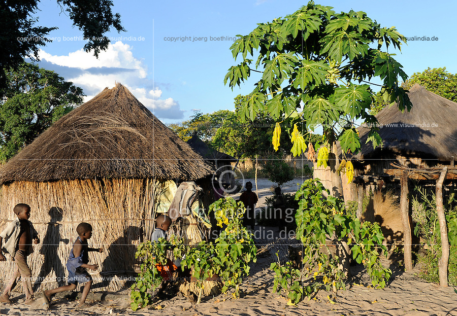 "Afrika Sambia Barotseland Mongu, Lozi Dorf Ilundu , kleine Jatropha Pflanzen und Papaya Baum  | .Africa ZAMBIA Barotseland Mongu Lozi village Ilundu .| [ copyright (c) Joerg Boethling / agenda , Veroeffentlichung nur gegen Honorar und Belegexemplar an / publication only with royalties and copy to:  agenda PG   Rothestr. 66   Germany D-22765 Hamburg   ph. ++49 40 391 907 14   e-mail: boethling@agenda-fototext.de   www.agenda-fototext.de   Bank: Hamburger Sparkasse  BLZ 200 505 50  Kto. 1281 120 178   IBAN: DE96 2005 0550 1281 1201 78   BIC: ""HASPDEHH"" ,  WEITERE MOTIVE ZU DIESEM THEMA SIND VORHANDEN!! MORE PICTURES ON THIS SUBJECT AVAILABLE!! ] [#0,26,121#]"