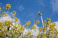 Alternative Energie: EUROPA, DEUTSCHLAND, HAMBURG, (GERMANY), 06.05.2005: Wind, Windkraft, Windrad, Windraeder, Windmuehlen, Windgeneratoren, Windturbinen, alternative Energie, erneuerbar, Anlage, Windenergie, Windenergieanlage, WEA, Kraftwerk, Windkraftanlage, Windkraftwerk, Wind-Kraftwerk, regenerative Energiequelle, Energiebedarf, Ressourcen, elektrischer Strom, Stromerzeugung, Stromquelle, dezentrale Energieversorgung, Energiegewinnung, kommunal, Wirtschaft, Energiewirtschaft, Elektrizitaet, Industrie, Investition, Umwelt, umweltfreundlich, Umweltpolitik, Landschaft, Raps, Pflanzen, Blueten, gelb, Feld, Rapsfeld, Rohstoff, Himmel, Wolken, Oekologie, Ueberblick, Uebersicht, Deutschland, Windraeder, Windmuehlen, Elektrizitaet, Blueten, Oekologie,.c o p y r i g h t : .A U F W I N D - L U F T B I L D E R . de.G e r t r u d - B a e u m e r - S t i e g 1 0 2,.2 1 0 3 5 H a m b u r g , G e r m a n y .P h o n e + 4 9 (0) 1 7 1 - 6 8 6 6 0 6 9.E m a i l H w e i 1 @ a o l . c o m .w w w . a u f w i n d - l u f t b i l d e r . d e.K o n t o : P o s t b a n k H a m b u r g .B l z : 2 0 0 1 0 0 2 0  K o n t o : 5 8 3 6 5 7 2 0 9.C o p y r i g h t n u r f u e r j o u r n a l i s t i s c h Z w e c k e, keine P e r s o e n l i c h ke i t s r e c h t e v o r h a n d e n, V e r o e f f e n t l i c h u n g n u r m i t H o n o r a r n a c h M F M, N a m e n s n e n n u n g u n d B e l e g e x e m p l a r !.