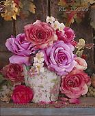 Interlitho, Alberto, FLOWERS, photos, roses, vase, KL16369,#f# Blumen, Natur, flores, naturaleza