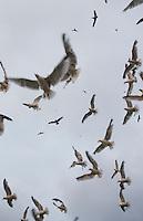 Seagulls at Carbis bay. Cornwall, England
