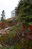 Autumn at Bass Harbor Head Light  #LH44