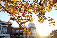 Fall leaves: gingko tree and Colvard Union.<br />  (photo by Megan Bean / &copy; Mississippi State University)