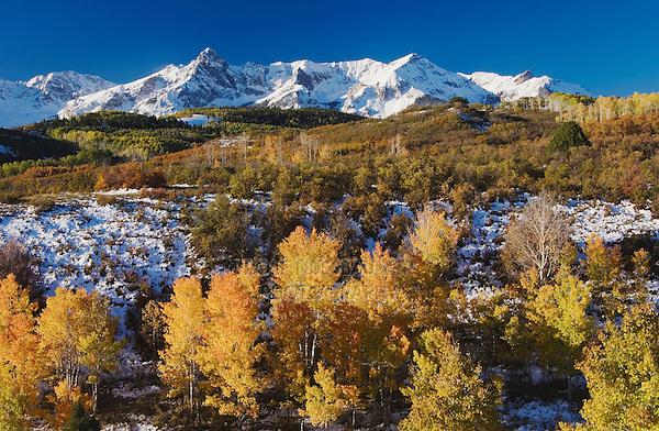 San Juan Mountains and Aspen trees in fallcolor at sunrise, Dallas Divide, Ouray, Rocky Mountains, Colorado, USA, September 2006