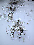 Garden in winter with dead plants