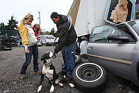 "Kelly Page and her daughter Maggie, age 2, offer a dog treat to a dog living in Albertson Used Tire yard in West Seattle on January 9, 2009. The one year old pitbull named Bush, after President Bush, is shut in the car during work hours, then let out to guard the tire yard by night.  His owner, the owner of the tire shop, Alberto Quintanilla thinks the ban on the chaining ordinance is a good idea and adds that he doesn't take the dog home with him because he would put him on a chain.  The dog doesn't get any interaction with people because Alberto says his customers don't like it.  ""That's where he needs to be"" he says.  He's doing OK in the car."" (Karen Ducey/Seattle Post-Intelligencer)"