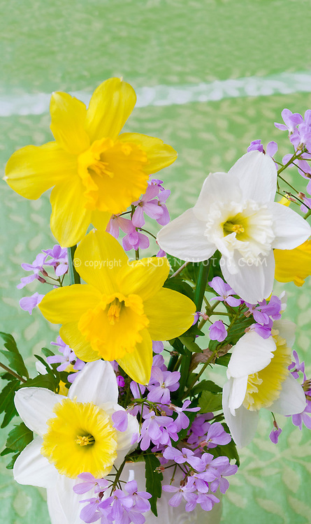 Spring Bouquet Of Daffodils Flowers Plant Flower Stock