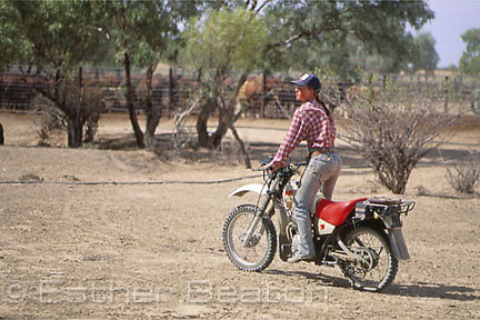"A jillaroo, using motorbike for mustering cattle on ""Bulloo Downs"" station, near Thargomindah, outback Queensland."