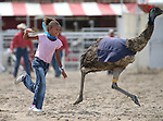 Reagan Colburn, 9, of Fallon, competes in an emu race at the 56th annual International Camel &amp; Ostrich Races in Virginia City, Nev. on Friday, Sept. 11, 2015. <br /> Photo by Cathleen Allison