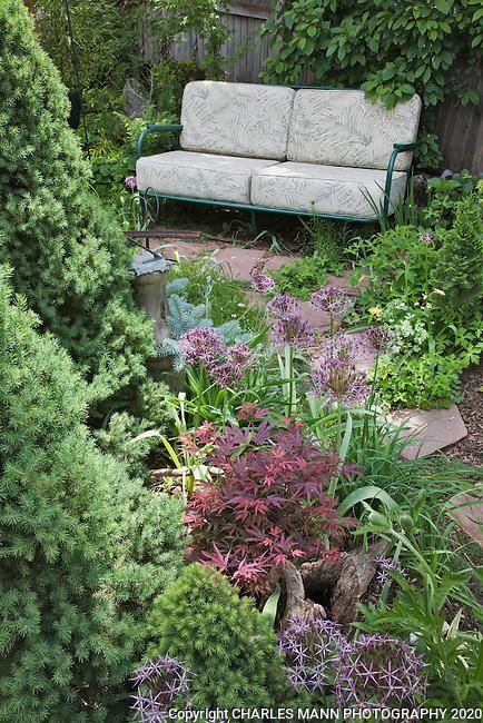 Dwarf spruces, maples, alliums and iris create a hidden nook in DanJohnson's Denver garden.