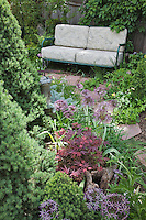 Dwarf spruces, maples, alliums and iris create a hidden nook in DanJohnson's Denver garden.