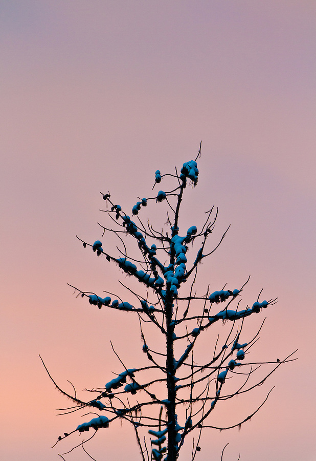 Warm, pastel colors are seen during sunset with the top of a tree extending from the bottom.