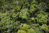 Barron Falls National Park Rainforest from Skyrail Cableway, North Queensland, Australia