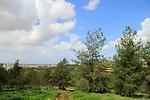Israel, Sharon region, Rosh Haayin forest