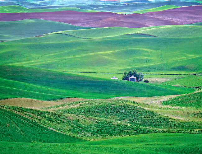 Silo and green spring wheatfields in the Palouse Hills of Eastern Washington, USA