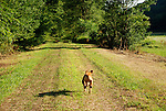 Seeling Farm, Trout Run, PA. Jeb running.
