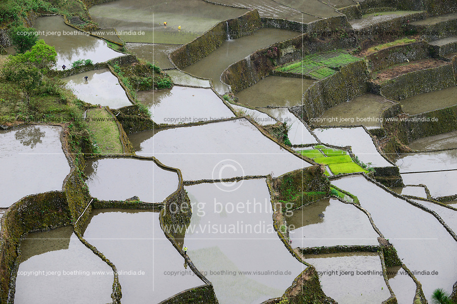 PHILIPPINES, Mountain Province, Cordilleras, rice farming on rice terrace in mountains near Bayyo / PHILIPPINEN, Mountain Province, Cordilleras, Reisanbau und Reisfelder in Terrassen in den Bergen bei Bayyo