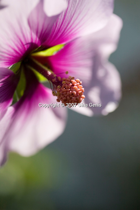 Macro image of a purple tropical flower