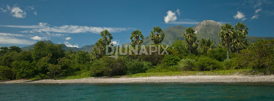 Beach, coconut palm and Mount Egon view, Maumere, Flores