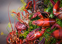 Freshwater crayfish which has been steamed in a pot of fresh dill sprigs.