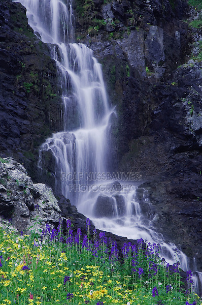 Waterfall and wildflowers in alpine meadow,Heartleaf Arnica,Tall Larkspur, Bistort,Ouray, San Juan Mountains, Rocky Mountains, Colorado, USA