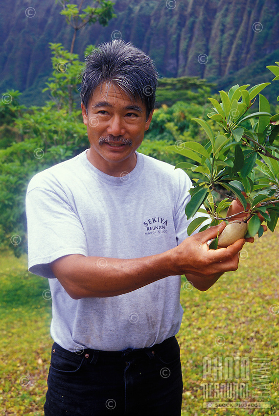 EDITORIAL ONLY. Sapodilla, an exotic fruit displayed by island nursery owner