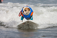 DEL MAR, CALIFORNIA - SEPTEMBER 8TH: <br /> Surfing Dogs at the Helen Woodward Surf Dog Surf-A-Thon at Del Mar Dog Beach on September 8th 2019. <br /> CAP/MPI/TF<br /> ©TF/MPI/Capital Pictures