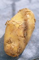 Europe/France/Auvergne/12/Aveyron/Laguiole: Ingrédients de la truffade et de l'aligot - La pomme terre