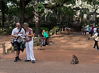 Tourist at the Bayon Temple and a Monkey is looking on. Siem Reap, Cambodia