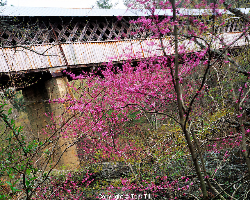 Horton Mill Covered Bridge and Redbuds, Blount County, Alabama    Cercis canadensis  Souhtern Applachian Mountain foothills   Highest covered bridge water in the United States   Over Warrier River