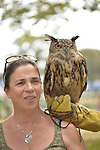Old Westbury, New York, U.S. - August 23, 2014 - CATHY HORVATH is with AUGIE, a 4-year-old male Eurasian Eagle Owl (Bubo bubo) with large orange eyes, from non-profit WINORR, Wildlife in Need of Rescue and Rehabilitation, at the 54th Annual Long Island Scottish Festival and Highland Games, co-hosted by L. I. Scottish Clan MacDuff, at Old Westbury Gardens. WINORR is run by CAthy and her husband Bobby, licensed animal rehabilitators in North Massapequa.