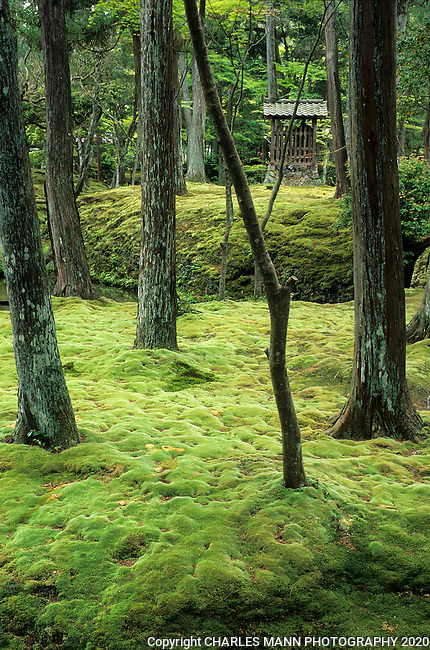 Saiho-ji is also known as Koka-dera or the Moss Temple, and is one of the most venearble old gardens in the Arashyama district of Kyoto. It  is nine hundred years old.