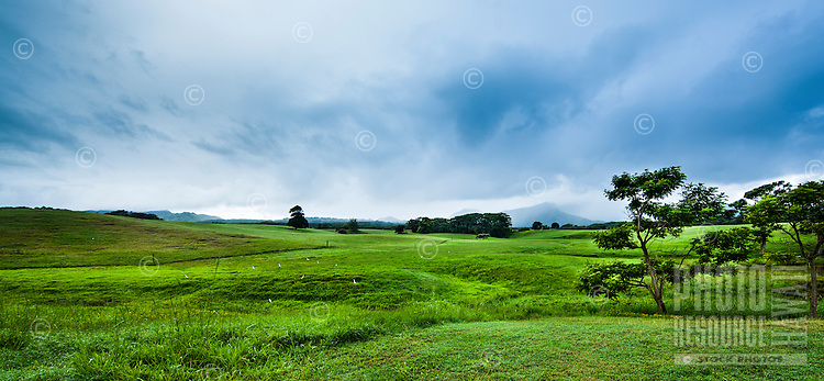 A beautiful ranch near Princeville on Kaua'i, with white birds in the foreground and rain kissing the mountains in the distance.