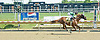 Nico The Champ winning at Delaware Park on 7/2/11