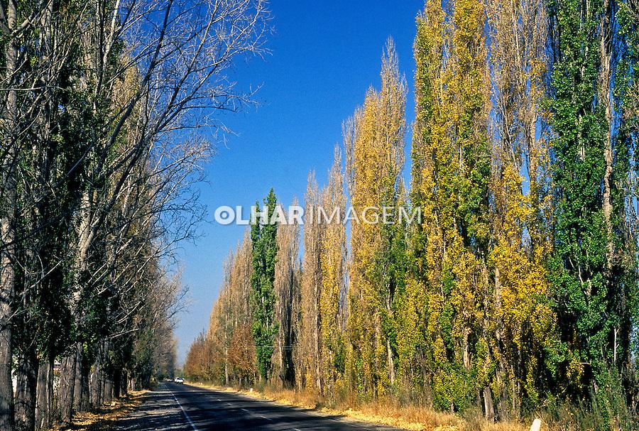 Estrada em Mendoza. Argentina. 1997. Foto de Ricardo Azoury.