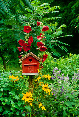 Red barn birdhouse with hollyhocks and black eyed susans (rudibecka) adds design feature to country garde,