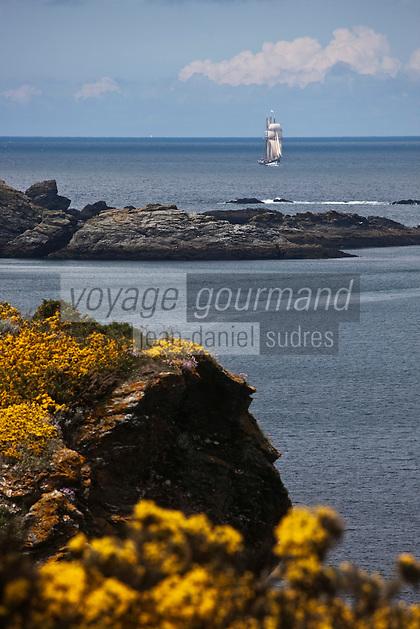 Europe/France/Bretagne/56/Morbihan/ Belle-Ile-en-Mer/Sauzon: Lande d'ajoncs et Côte rocheuse à Port Puce