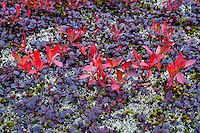 Colorful autumn groundcover plants.