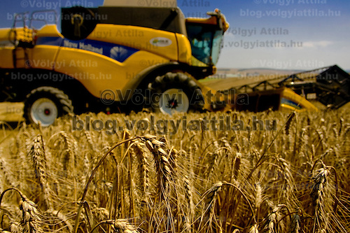 Wheat harvest is in progress in Gyermely, Hungary. Wednesday, 15. July 2009. ATTILA VOLGYI