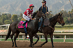ARCADIA, CA  JANUARY 07: #8 Midnight Bisou, ridden by Mike Smith, in the post parade of the Santa Ynez Stakes (Grade ll) on January 7, 2018, at Santa Anita Park in Arcadia, CA. (Photo by Casey Phillips/ Eclipse Sportswire/ Getty Images)