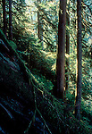 Old growth fir forest, Noisy Creek Preserve, The Nature Conservancy, Cascade Range, Washington State, Pacific Northwest, USA, Preserve has become part of the Mount Baker National Forest,