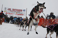 One of Patrick Mackey's dogs leaps in the air just before they leave the start line of the 2009 Junior Iditarod on Knik Lake on Saturday Februrary 28, 2009.
