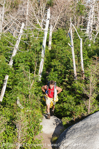 Hiker ascending Caps Ridge Trail in Thompson and Meserve's Purchase, New Hampshire during the summer months; part of the Presidential Range in the White Mountains. Built in 1920, this trail begins on Jefferson Notch Road and leads the summit of Mount Jefferson.