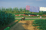 Amish garden and washline with quilts. Nippenose Valley, PA. 1998