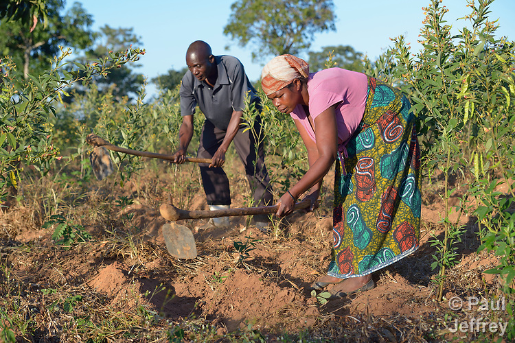 Mariet Hara and her husband Pressing Moyo work on their farm in Edundu, Malawi. They and other farmers in the village have benefited from intercropping and crop rotation practices they learned from the Malawi Farmer-to-Farmer Agro-Ecology project of the Ekwendeni Mission Hospital AIDS Program, a program of the Livingstonia Synod of the Church of Central Africa Presbyterian.