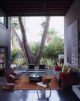 A pair of Boomerang chairs by Richard Neutra in the courtyard living room are dwarfed by an Aleppo pine tree