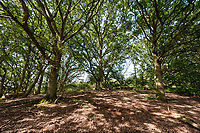BNPS.co.uk (01202 558833)<br /> Pic: BNPS<br /> <br /> Pictured: The property is in the Dedman Vale Area of Natural Beauty (AONB) in Suffolk<br /> <br /> A charming country house in the heart of idyllic 'Constable Country' has emerged on to the market for £1.65million.<br /> <br /> Broome Hill is in the Dedman Vale Area of Natural Beauty (AONB) in Suffolk, where the painter John Constable (1776-1837) was born.<br /> <br /> This rural landscape was where he painted many of his most celebrated works, including Dedham Vale and The Hay Wain.<br /> <br /> The four bedroom home, which was built in 1998 in the style of 'an 19th century orangery', has five acres of land and its own fish pond.<br /> <br /> It is being sold with estate agent Chapman Stickels.