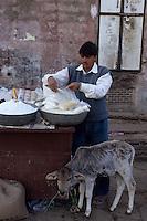 Asie/Inde/Rajasthan/Jaipur: Marchand de graines et veau