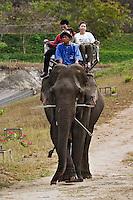 Asian tourists riding Asian Elephant, Thai Elephant Conservation Center, Lampang, Thailand. (Elephas maximus)