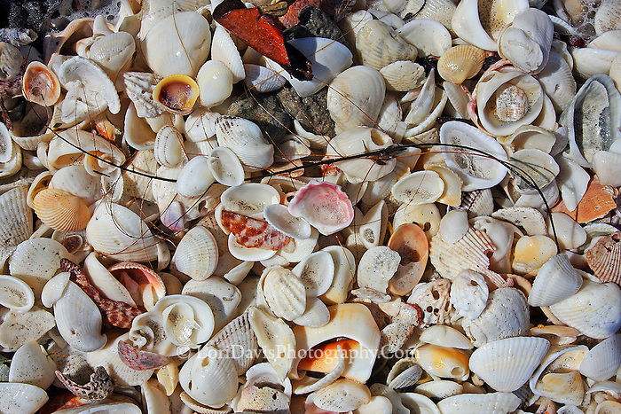 Sea Shell Mix